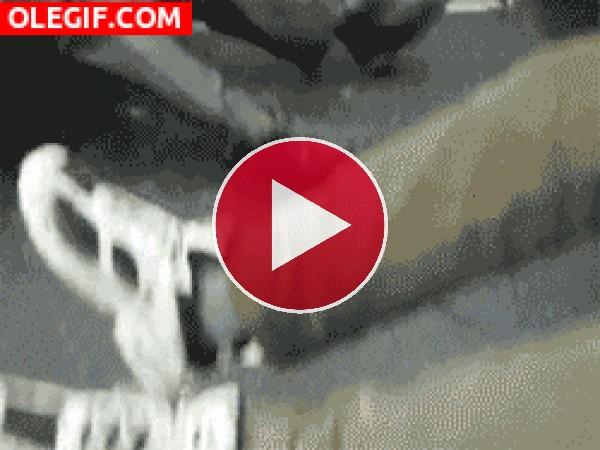 GIF: Esta rata a encontrado un amigo