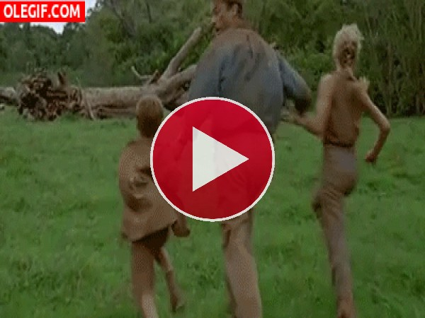 GIF: La persecución de los pollitos