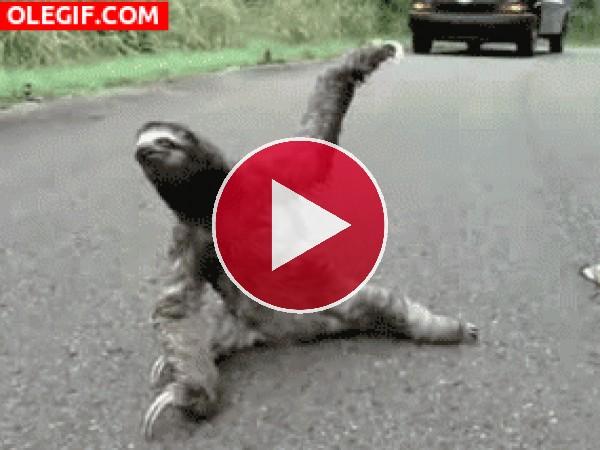 Perezoso practicando yoga