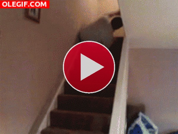 GIF: Rodando por las escaleras