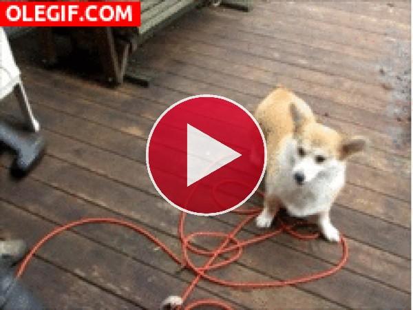 GIF: Aspirando al perro