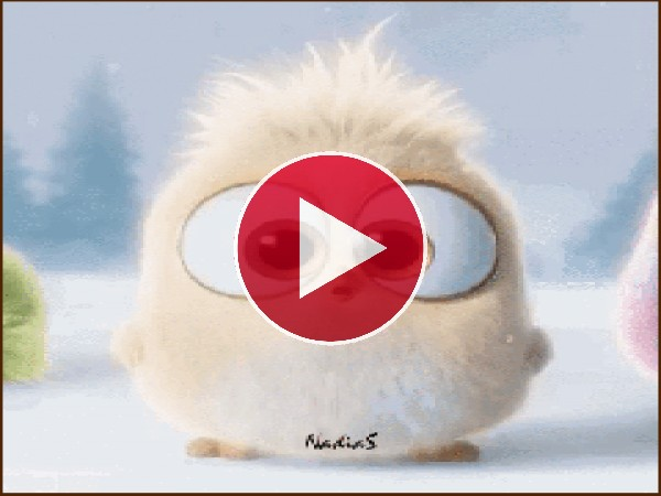 GIF: Un simpático pajarillo
