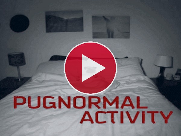 Pugnormal Actyviti