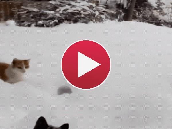 GIF: Perdido en la nieve