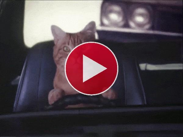 GIF: Un gato al volante