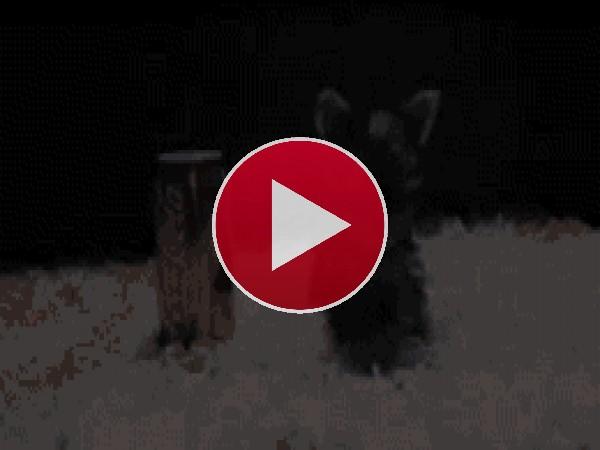 GIF: Este perro está inquieto