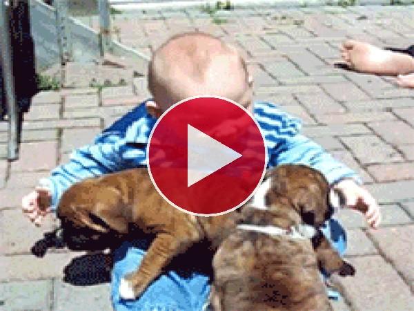 GIF: ¡Amo a estos perritos!