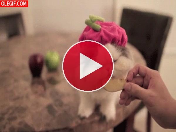 GIF: A esta gata le gusta la manzana