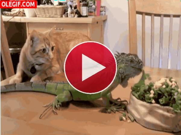 GIF: Menuda tragona es esta iguana