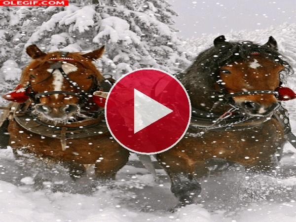 GIF: Caballos bajo la nieve