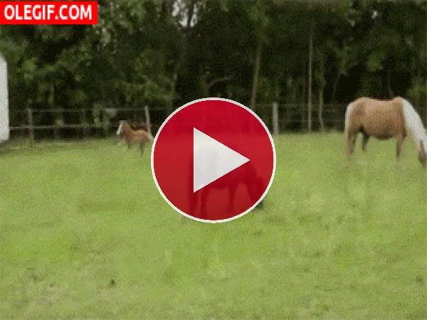 Potrillo corriendo sin rumbo