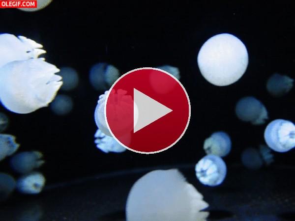 Pequeñas medusas en movimiento
