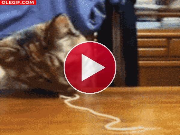 A este gato le gustan los espaguetis