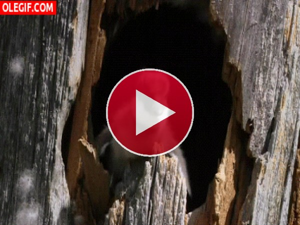 GIF: Abandonando el nido