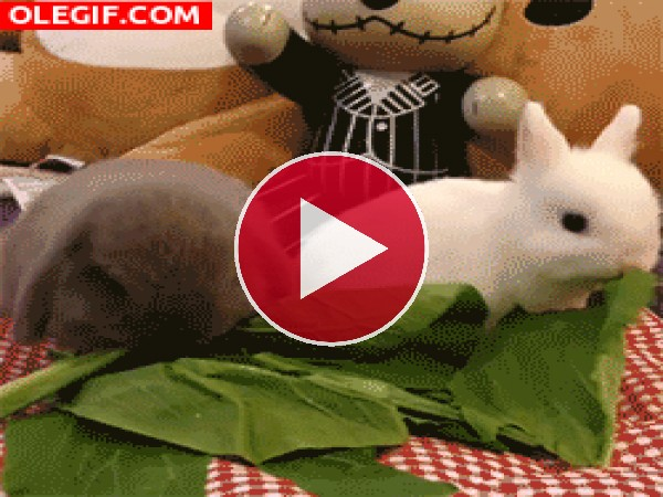 Mira a estos conejitos comiendo