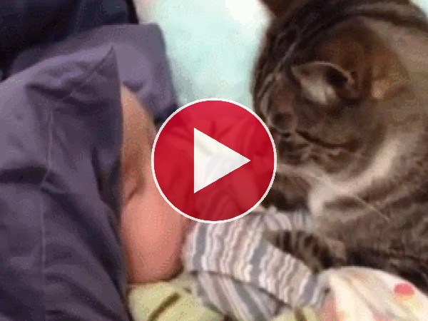 Mira a este gato dando besitos al bebé