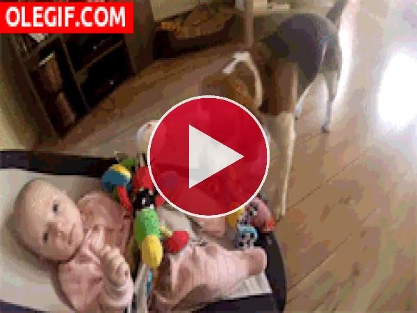 Este perro le quita los juguetes al bebé