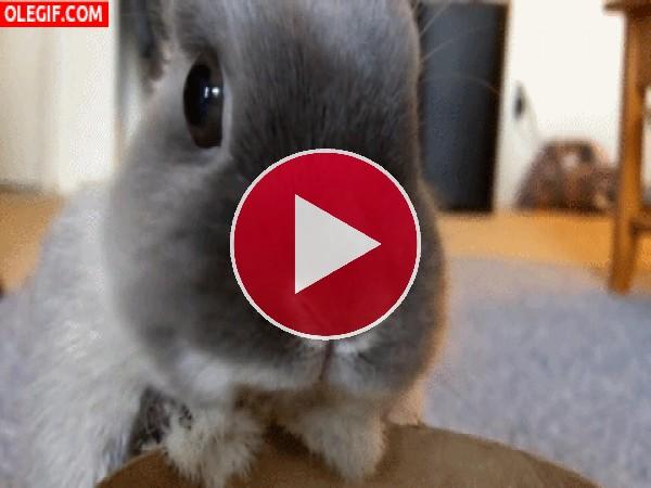 Un conejo moviendo los carrillos