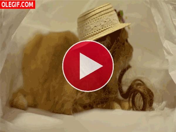 GIF: ¿Te gusta mi sombrero?