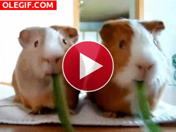 GIF: ¿Quien come más rápido?