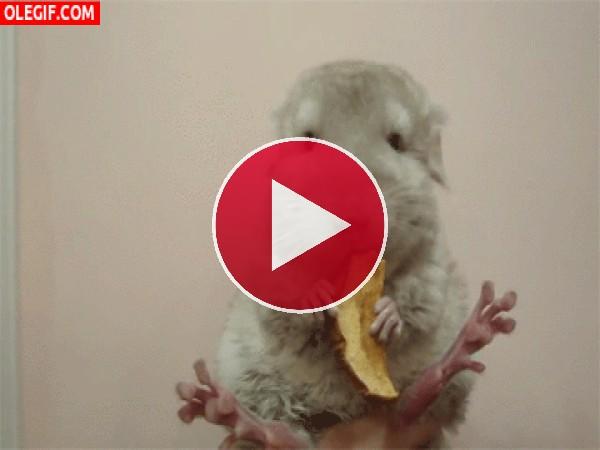Mira a este hámster comiendo manzana