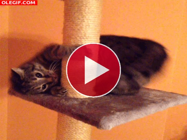 GIF: Este gato se va a marear
