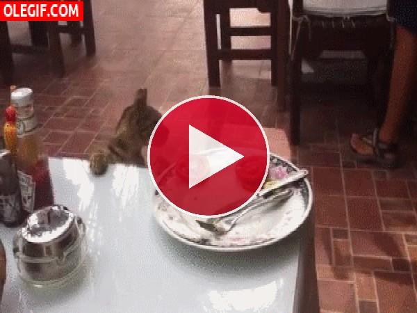 A este gato le gusta el tomate