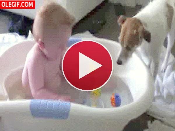 Mira a este perro quitando los juguetes al bebé