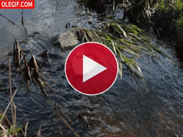 Agua fluyendo en un arroyo