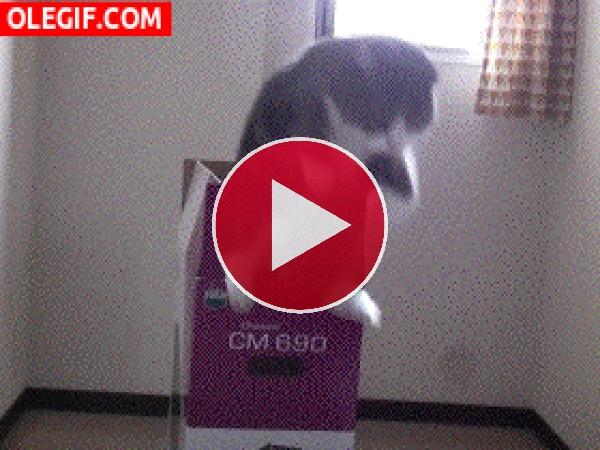La caja mágica de los gatos