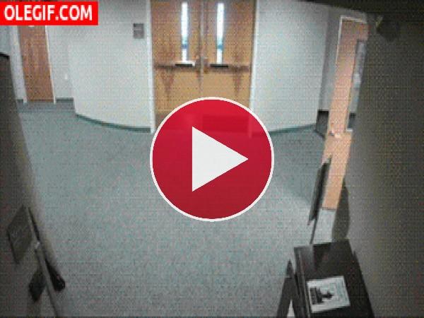Un cervatillo en el edificio