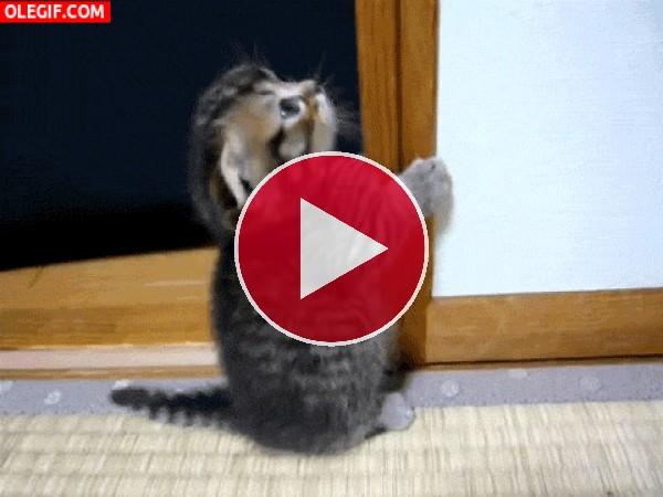 GIF: Gatito afilándose los dientes
