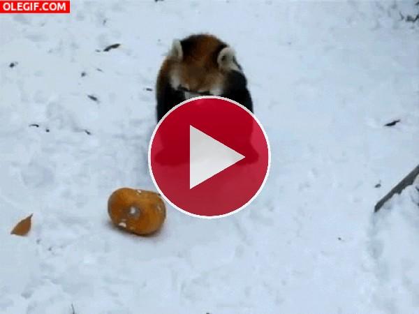 GIF: Resbalando en la nieve