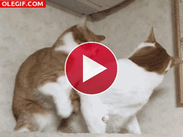 GIF: ¡Placaje!