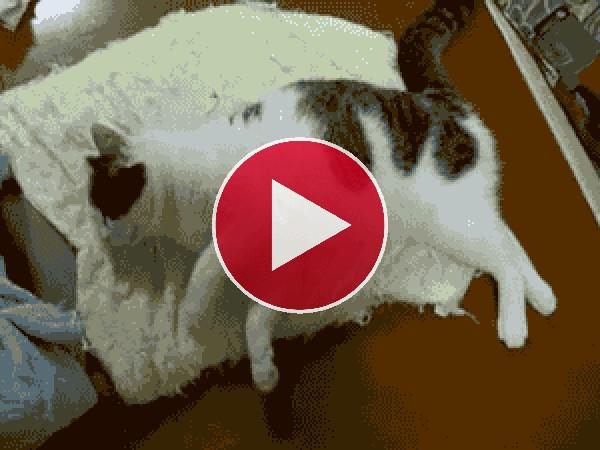 GIF: Este gato tiene pesadillas