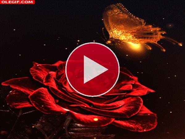 GIF: Mariposa volando sobre una rosa roja