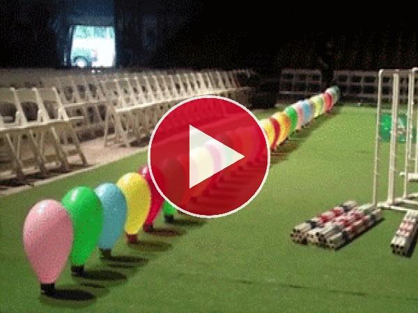 Perro explotando globos