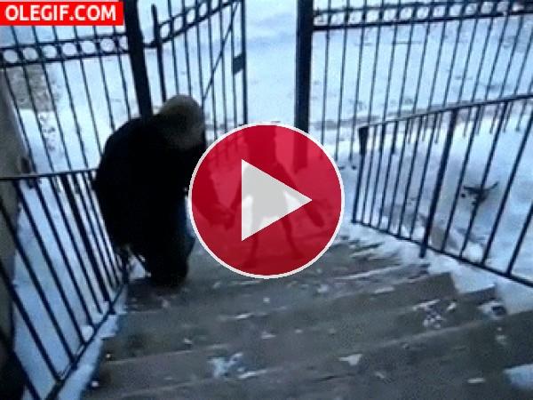Mira a este perro cómo sube las escaleras