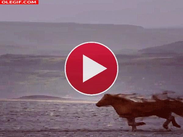 GIF: De caballo a unicornio