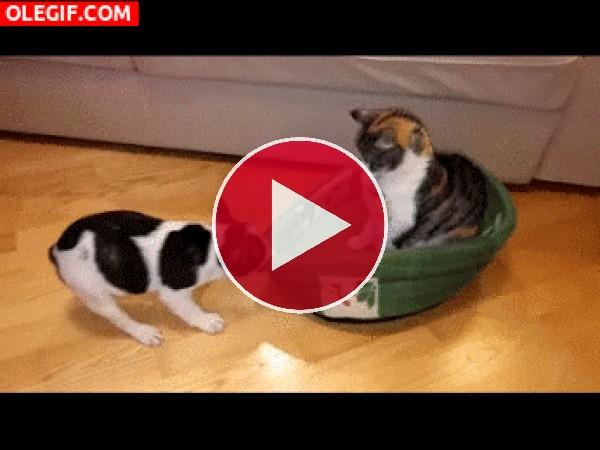 GIF: Este cachorro tiene mucha fuerza