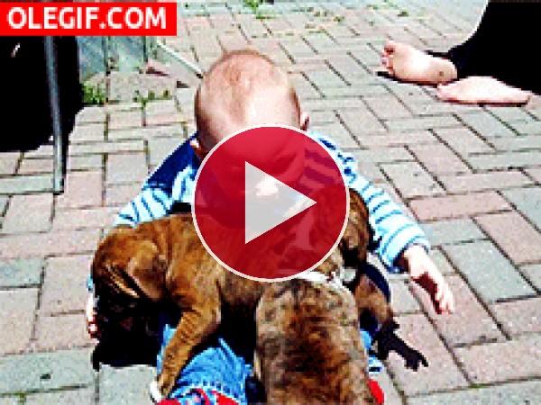 GIF: Amo a estos perritos