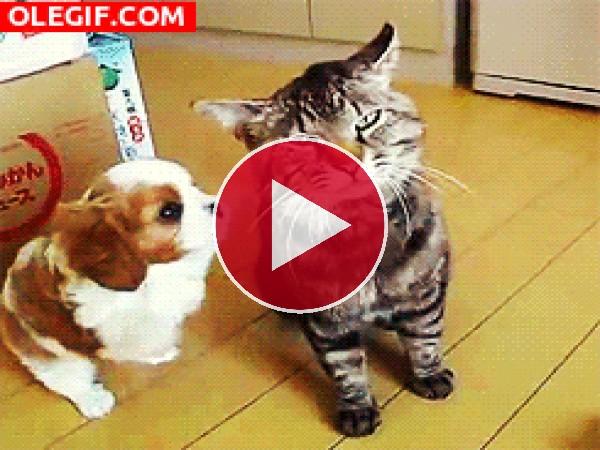 GIF: Quiero ser tu amigo