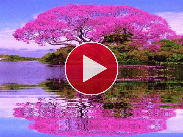 GIF: Árbol rosa reflejado en el agua