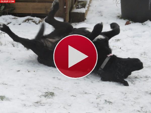 GIF: Revolcándose en la nieve