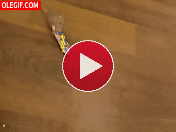 GIF: Rata skater