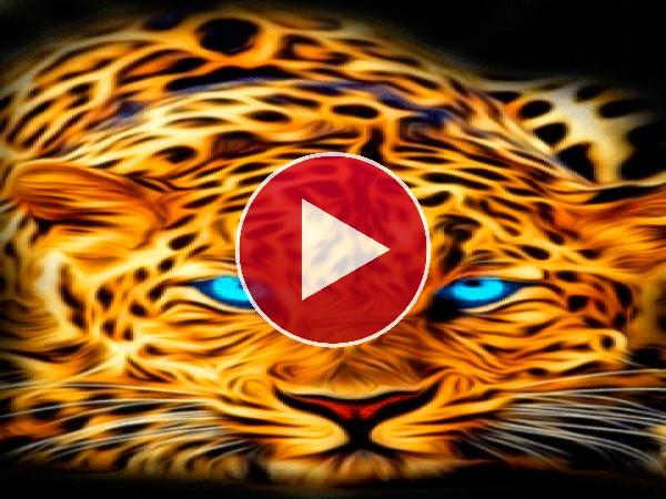 GIF: Un hermoso leopardo
