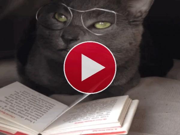 GIF: Soy un gran lector