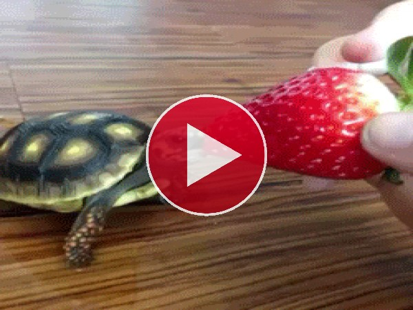 GIF: Vaya boca tiene la tortuga