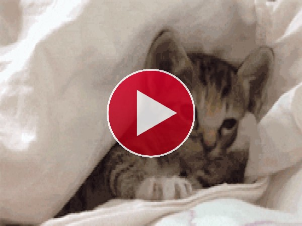 GIF: Metido entre las sábanas