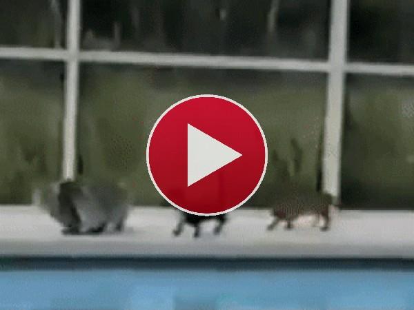 GIF: ¡Gato al agua!